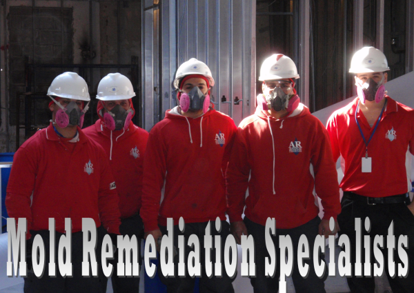 AM PM Enviormental Mold Remediation